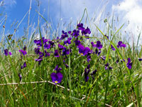 Clwydian Ecology photo of flowers in field